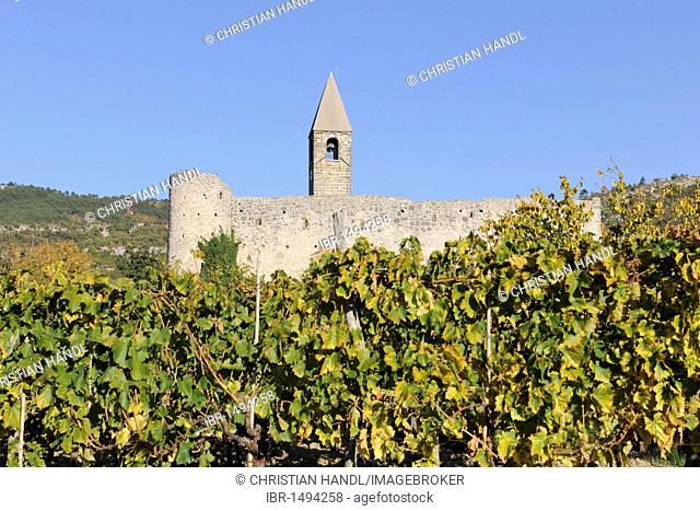 Vines and romanesque Church of the Holy Trinity, Hrastovlje, Cristoglie, Slovenia, Europe