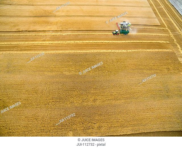 Aerial view combine harvester and tractor trailer in golden barley field