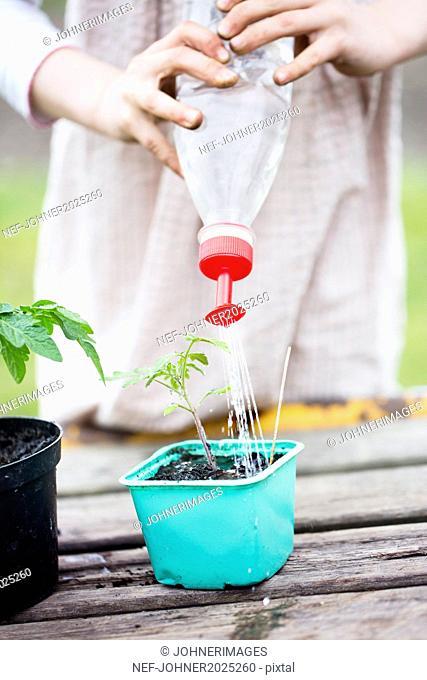 Girl watering seedling