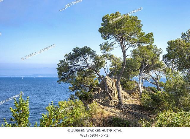 Landscape on Pointe du Layet, Le Lavandou, Var, Provence-Alpes-Cote d`Azur, France, Europe