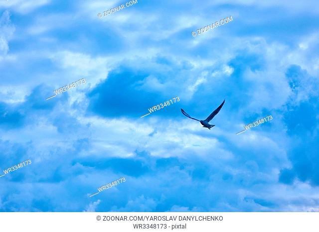 dark clouds, a gull flying in the sky
