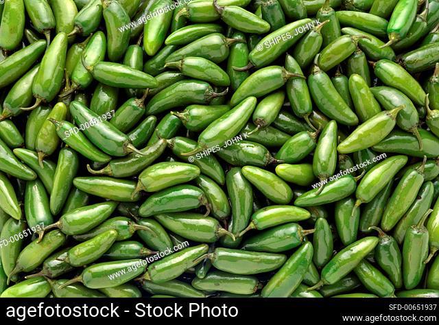 Green chillies (variety: Jalapeño)