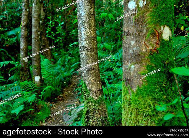 Damp forest in surroundings of Folgoso do Courel, Lugo, Spain