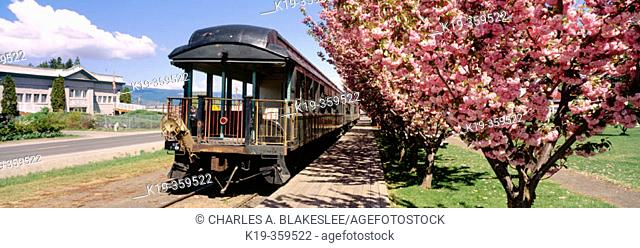 Cherry trees and Mount Hood Scenic Railway train at Parkdale station. Upper Hood River Valley. Hood River County. Oregon. USA