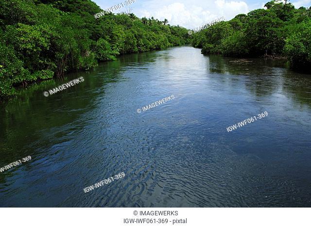 Fiji, Vanua Levu, Savusavu, Mangrove trees growing on river banks