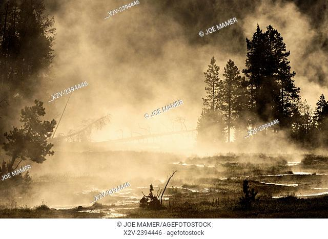 Steam rises from Tangled Creek in Yellowstone National Park