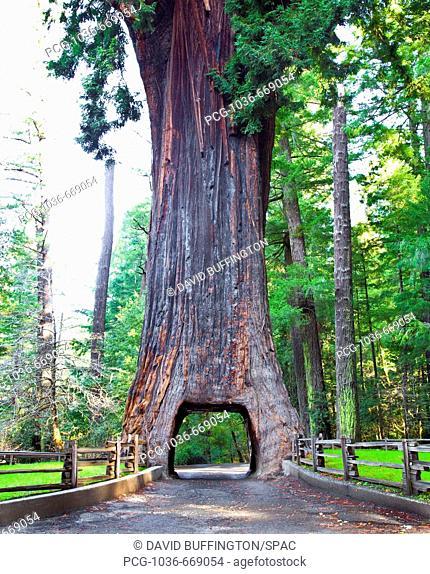 Chandelier Drive Thru Redwood Tree