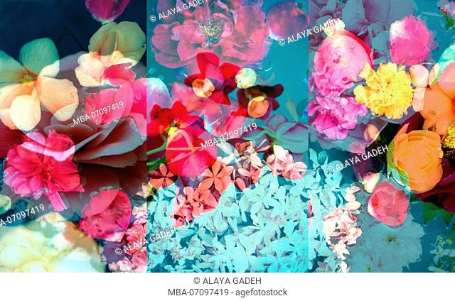 photomontage, flowers, flowers, detail, blur