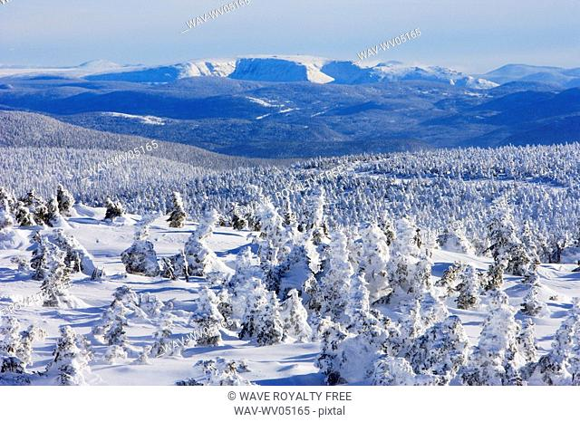 View of snow-covered trees and Mont Albert from Mont Logan, Quebec, Canada