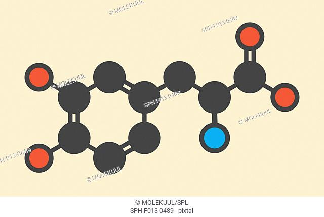 L-DOPA (levodopa) Parkinson's disease drug molecule. Stylized skeletal formula (chemical structure). Atoms are shown as color-coded circles: hydrogen (hidden)