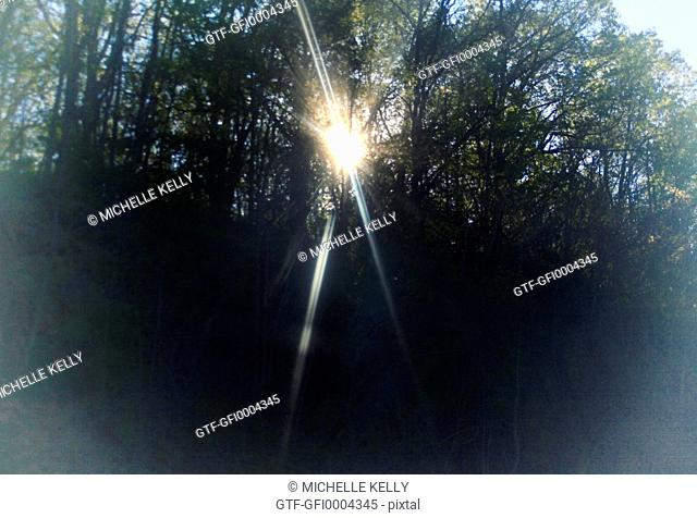 Sun Beams Shining Through Trees