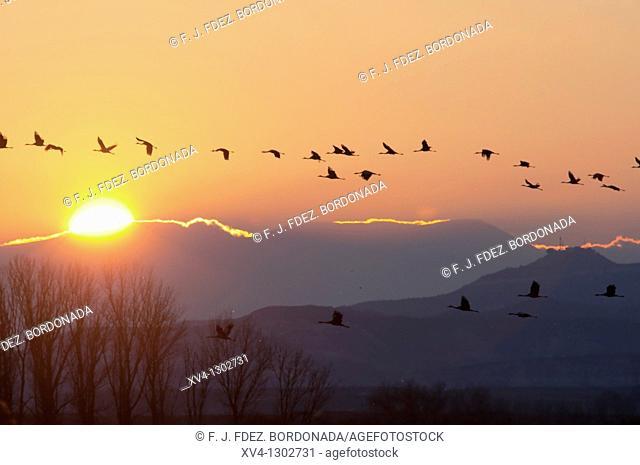 Birdwatching in Ejea de los Caballeros  Saragossa  Cinco Villas  Aragon  Spain