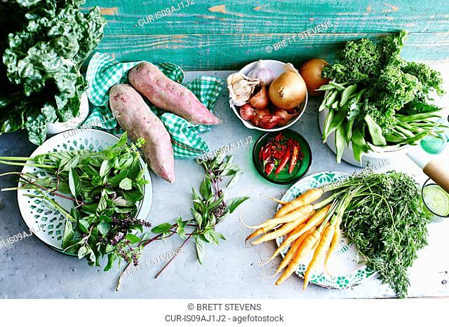Still life of fresh mint, sweet potatoes, baby carrots, chillies, onions, garlic, eschallots, green beans, kale and silverbeet