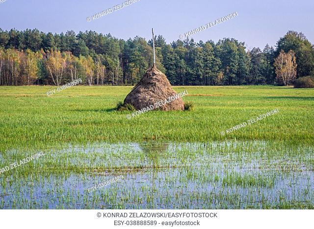 Flooded meadows in Granica, small village on the edge of Kampinos Forest, large forests complex in Masovian Voivodeship of Poland