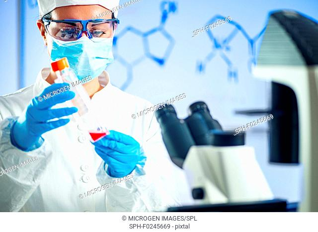 Scientist working in a laboratory, placing microscope slide on the stage