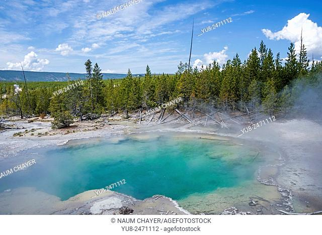 Pool in Emerald Spring - hot spring located in Norris Geyser Basin of Yellowstone National Park.k, Wyoming, USA