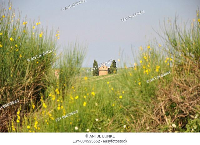 Toskana, Val d&039,Orcia, Vitaleta