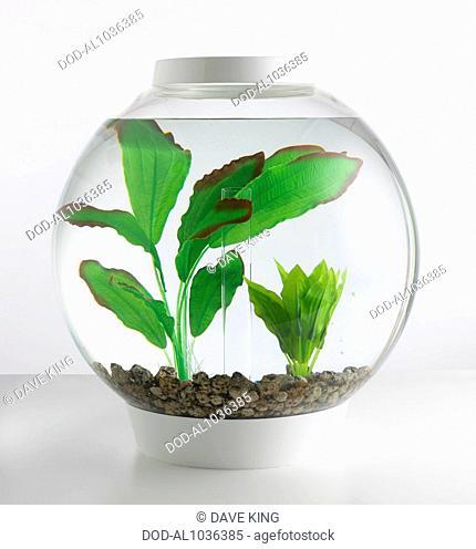 Goldfish bowl containing artificial plants