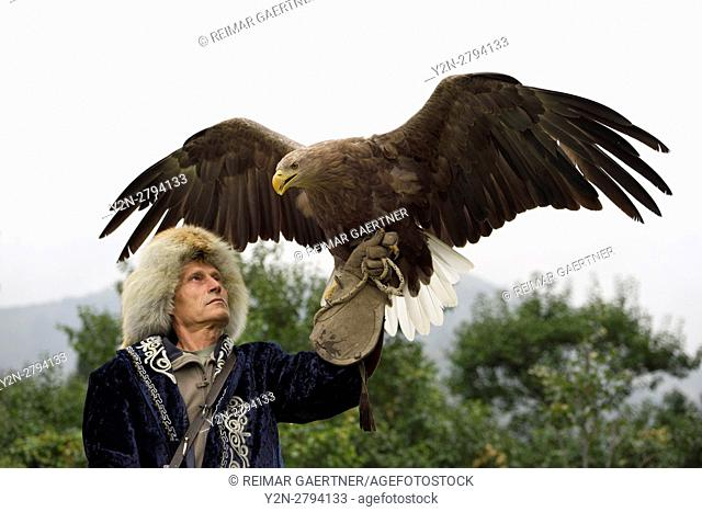 Trainer holding a White Tailed Eagle up with spread wings at Sunkar Falcon Farm Almaty Kazakhstan