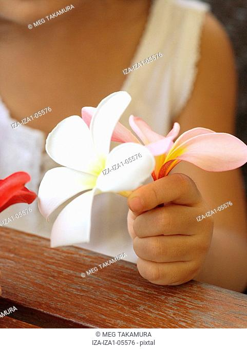 Mid section view of a girl holding frangipani flowers