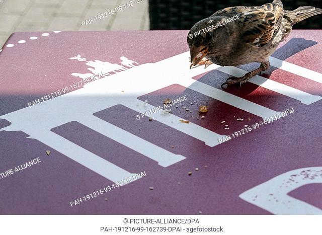 07 June 2019, Berlin: A sparrow eats crumbs from a table in front of a bakery. Photo: Soeren Stache/dpa-Zentralbild/ZB. - Berlin/Berlin/Germany
