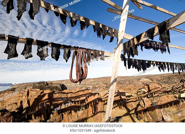 Hunted Narwhal Whale meat hung to dry in the midnight sun at Qeqertat, near Qaanaq, Inglefield Fjord