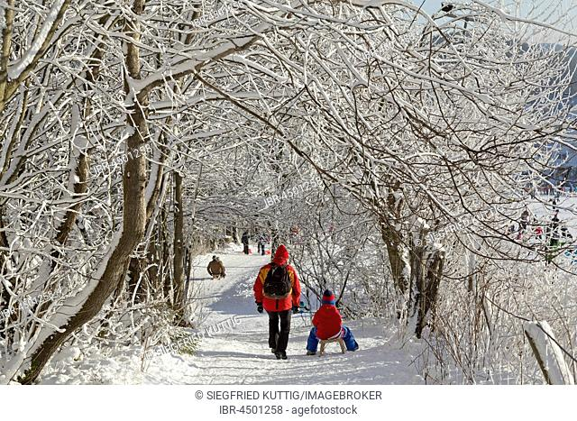 Walkers and sledders under snowy trees, Winterberg, Sauerland, North Rhine-Westphalia, Germany