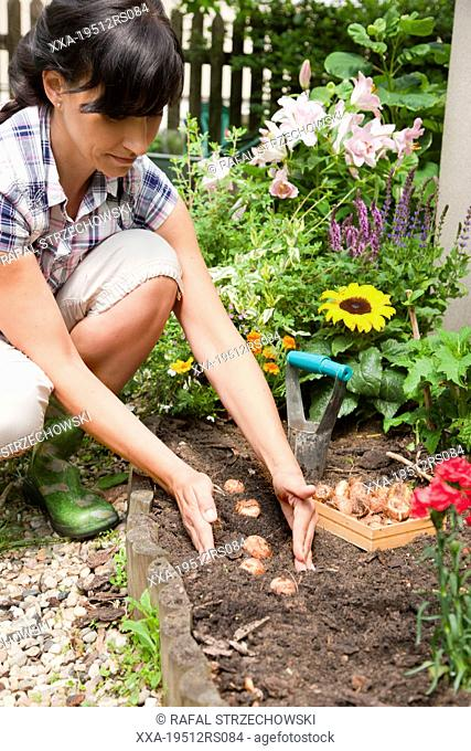 Woman planting gladiolus bulbs