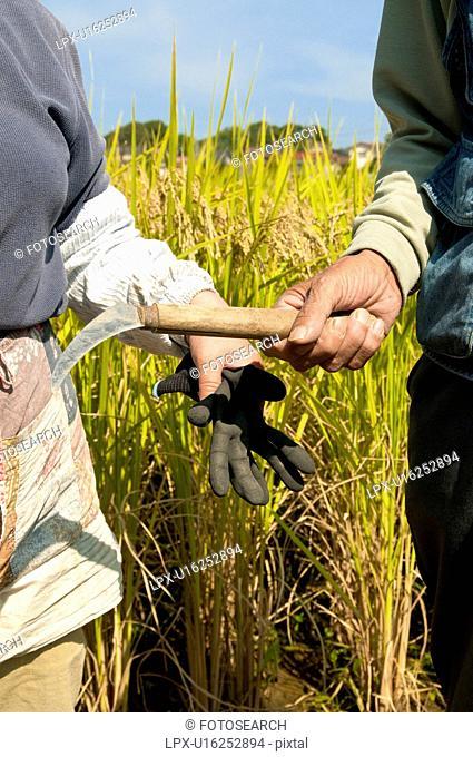 Farmer Couple in Rice Field