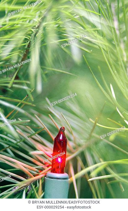 Close-up of red light on Christmas tree
