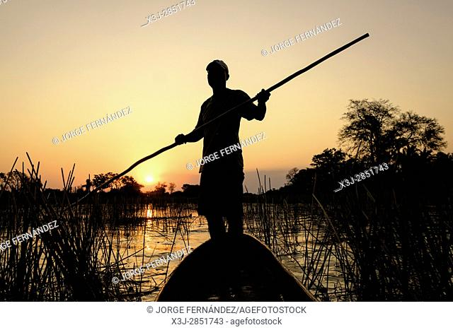 Silhouette of a man poling a Mokoro against the sunset. Mokoros are the main mean of transportation over the shallow waters of the channels in the Okavango...
