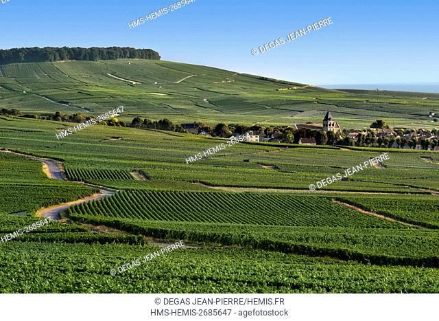 France, Marne, Vertus, Cote des Blancs, village in the middle of vineyard of Champagne classified Premier Cru