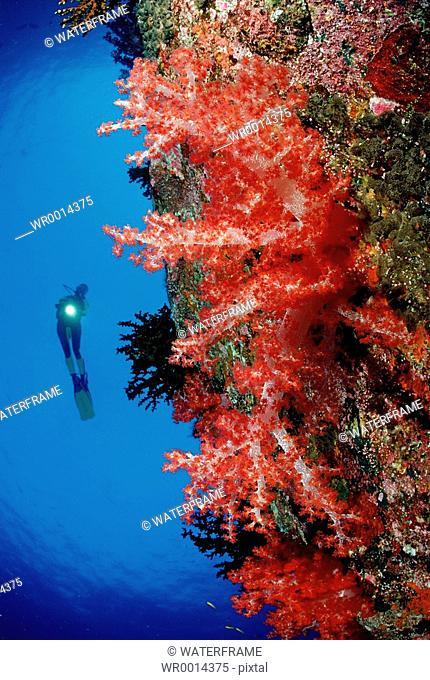 Diver at Coral Reef, Similan Islands, Thailand