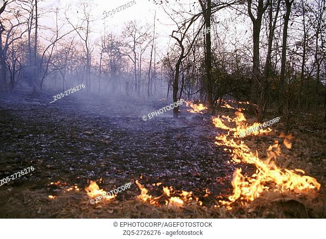 Forest fire- Nauradehi. fire from a distance. A typical forest fire in an open dry deciduous forest of central India