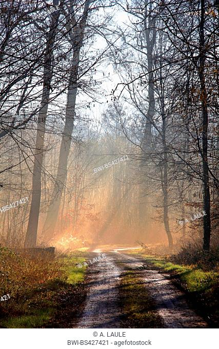 path and forest glade with sunrays , Germany, Baden-Wuerttemberg, Ortenau, Offenburg