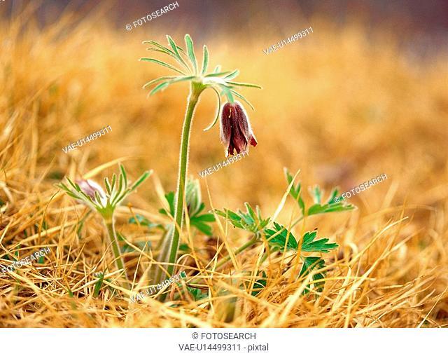 spring, plant, nature, season, flower, film