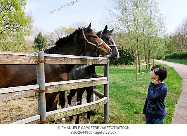 Boy of 11 years looks at the horses behind a fence