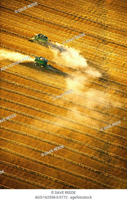 Agriculture - Aerial view of two combines harvesting wheat in late Summer, in bright late afternoon sunlight / Canada - Manitoba, nr. Dugald