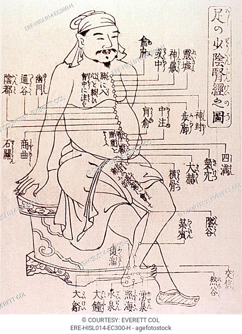 Acupuncture points on the torso and leg of the human body. Acupuncture was based on the Chinese medical theory that stimulation by needles at specific points to...