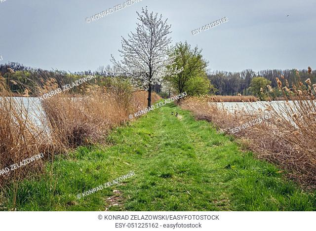 Road among fishponds in Hodonin city in the southeast of Moravia, in the Czech Republic