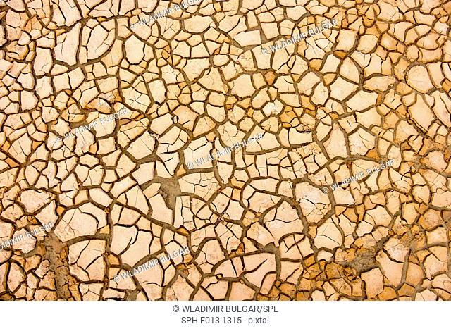 Patterns on cracked earth