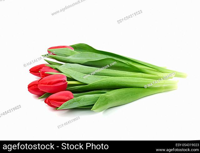 bouquet of fresh red blooming tulips with green leaves and stem isolated on white background with shadow, element for florist and designer, greeting flowers