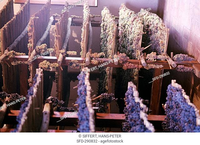Grapes drying on reed mats for Vin Santo, Tuscany