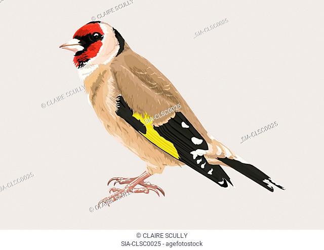Multi colored bird, beige background