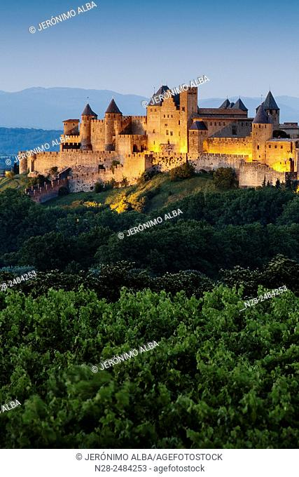 Vineyards and medieval fortified town at dusk, Carcassonne, Aude, Languedoc-Roussillon, France, Europe