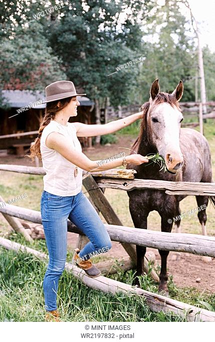 Woman feeding a horse in a paddock on a ranch