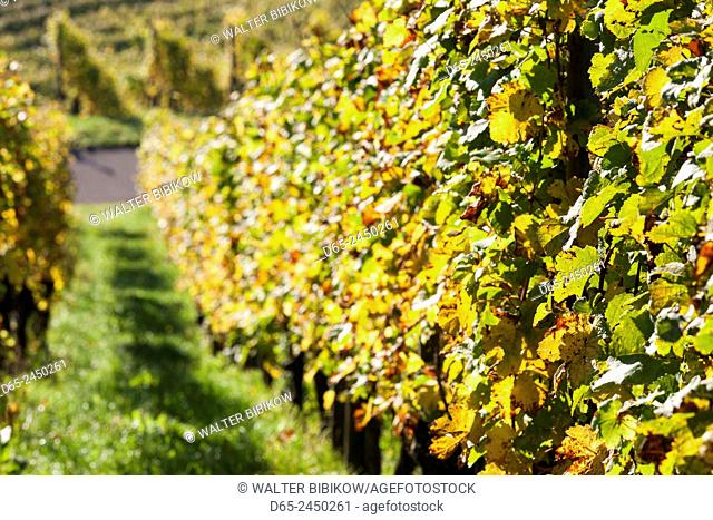 Germany, Baden-Wurttemburg, Stuttgart-Uhlbach, vineyards above Unter-turkheim, fall