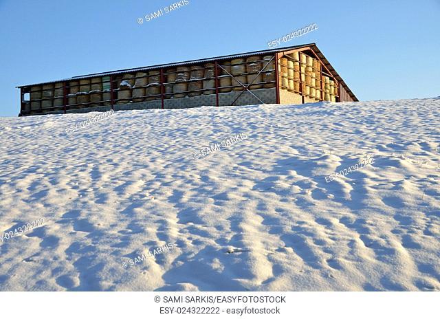 Hay bales in a barn shelter in a snowy field in winter