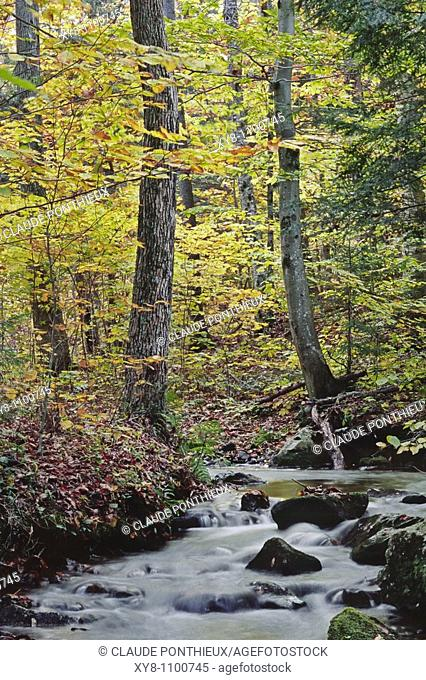 Forest-and-stream, Mt-Orford-National-Park, Québec, Canada
