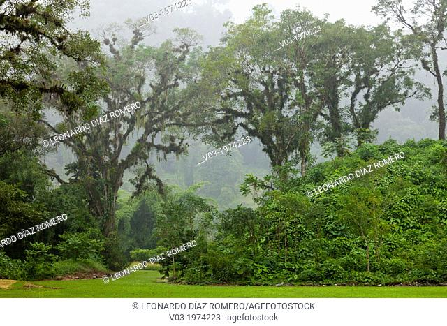 "Totonaca ruins named: """"El Huajilote"""", near Filobobos River, Veracruz, Mexico"